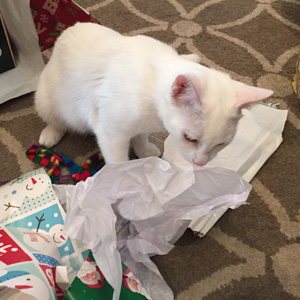 Sophie gets a present