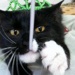 tuxedo cat wearing green tiara
