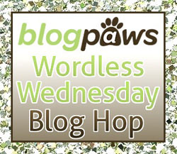 Blog Paws Blog Hop Wednesday