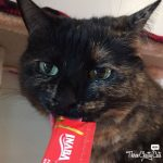tortie cat licking cat treat