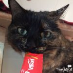 tortie cat eat cat treat