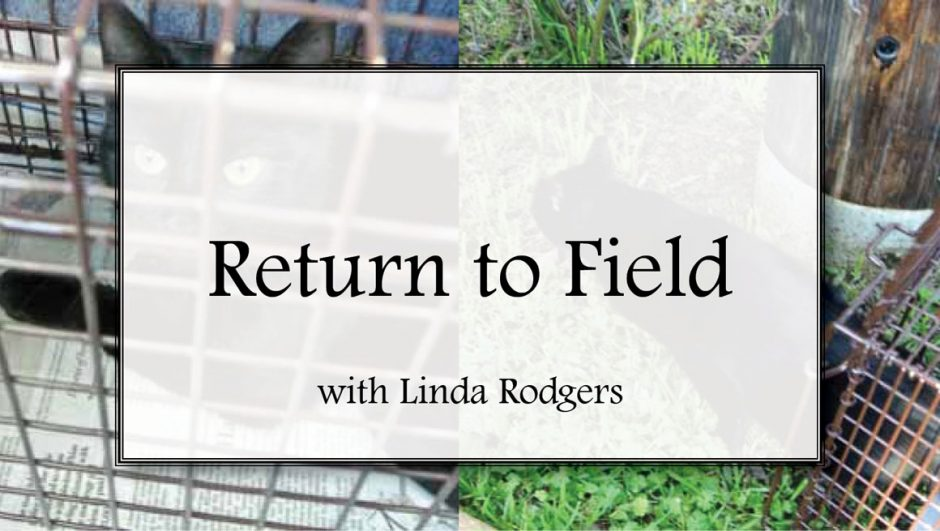Return to field with Linda Rodgers