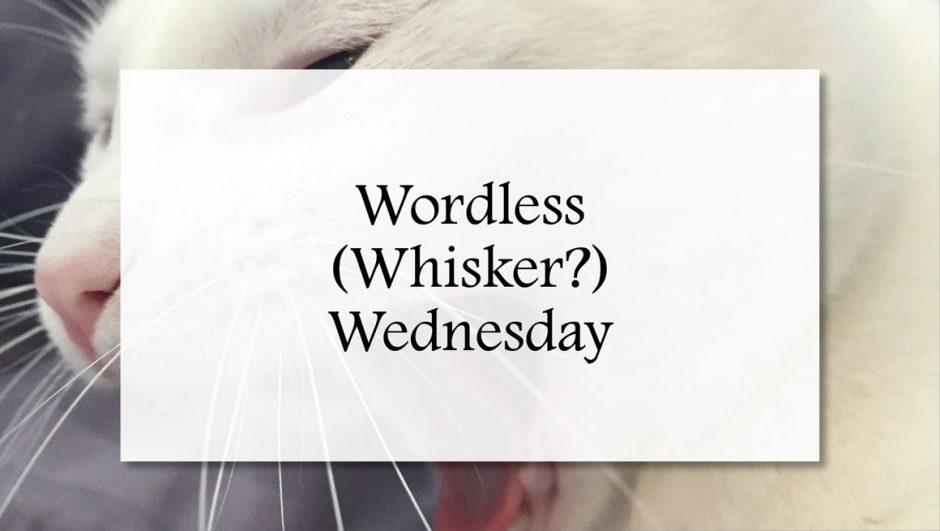 wordless whisker wednesday