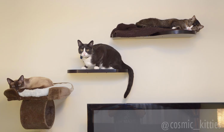three cats on wall shelves