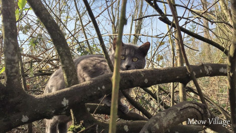 gray cat in tree