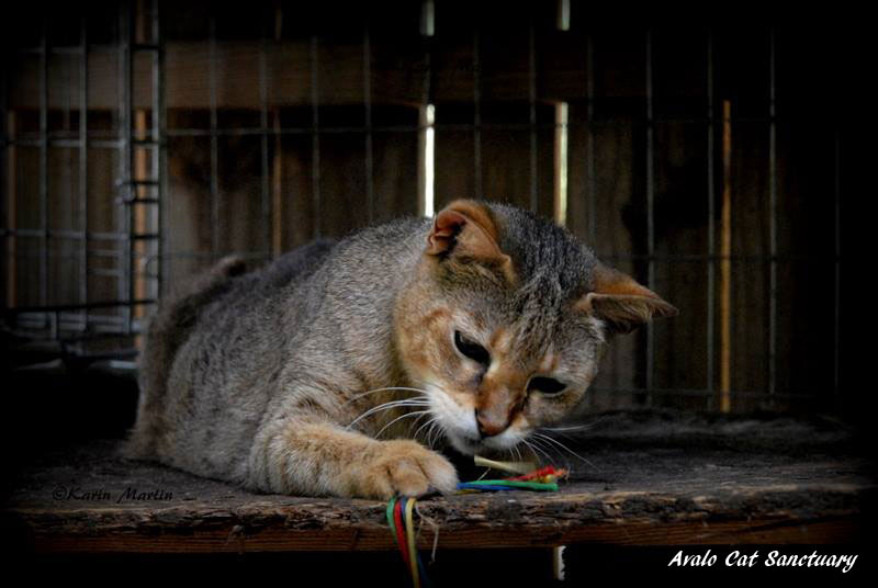 Avalo Cat Sanctuary