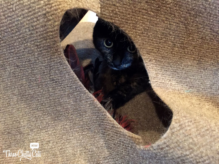 tortie cat playing in Ripple Rug