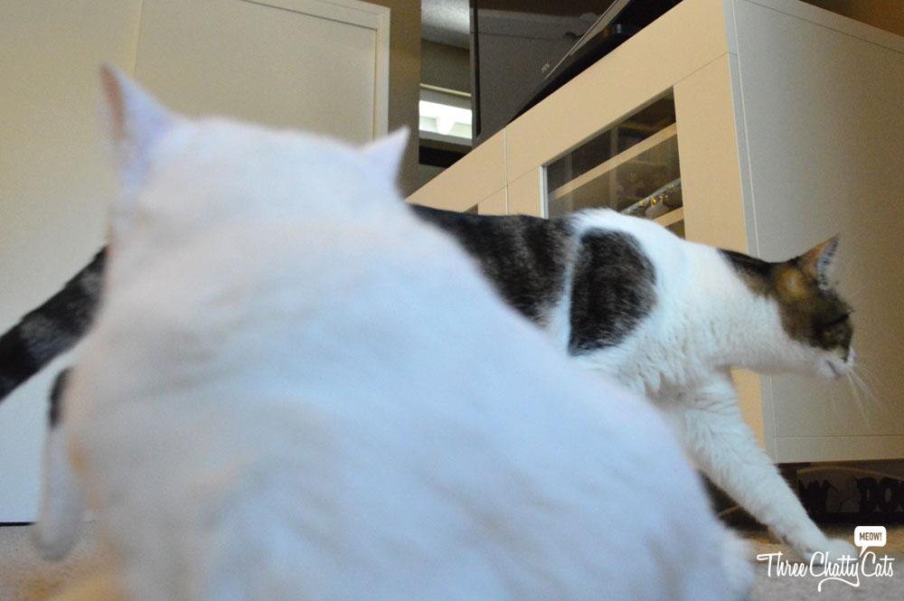 Alley Cats Cafe Menu
