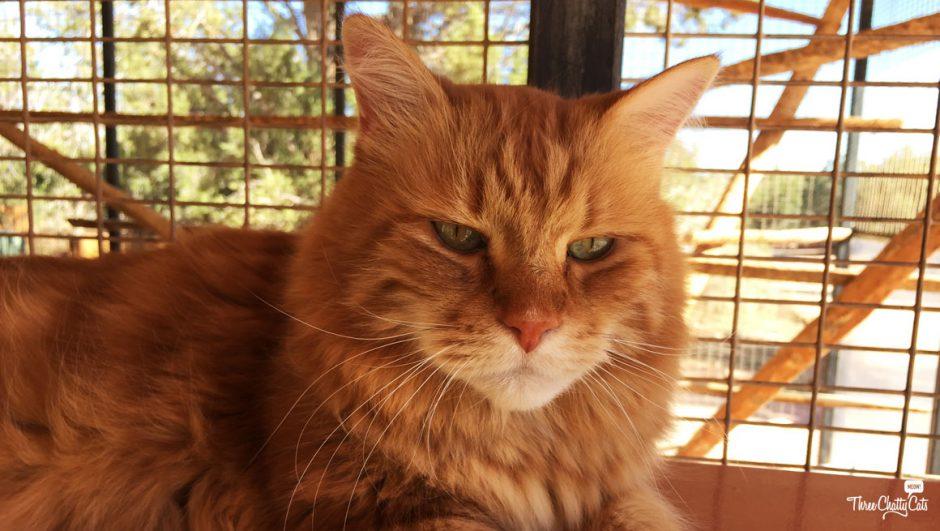 Ginger cat at Best Friends Animal Sanctuary