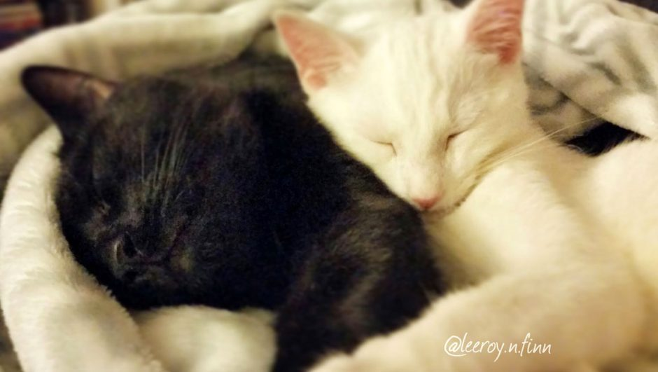 Leeroy and Finn, black cat and white cat