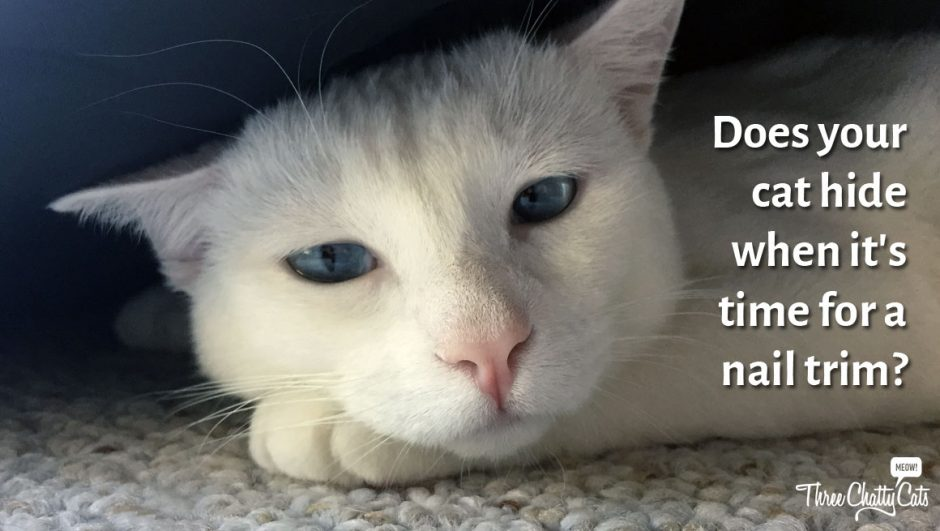 Does your cat hide when it's time for a nail trim?
