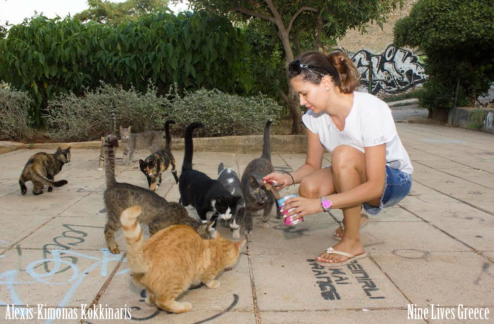 2016-09-26_acropoli-nine-lives-volunteer-feeding