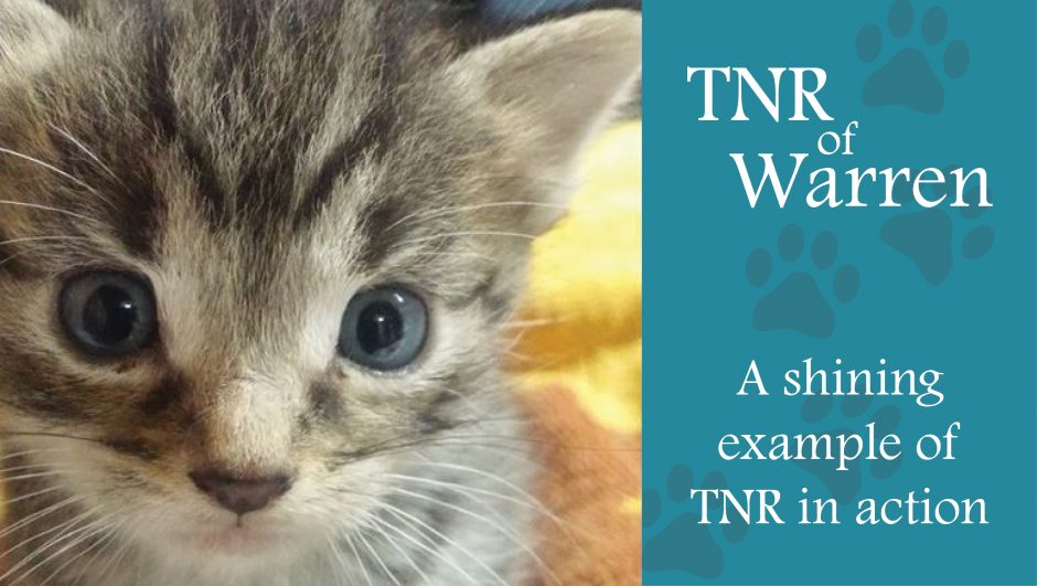 TNR of Warren