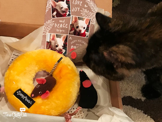 tortie cat with toys