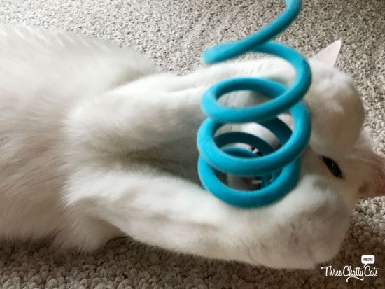 white cat playing with toy