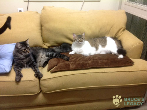 two tabby cats from Bruce's Legacy