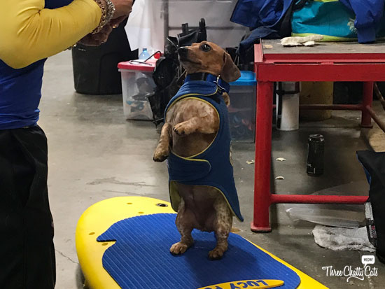 Coppertone the Surfing Dog