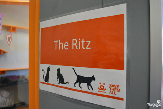 The Ritz Cat Room - Best Friends Los Angeles