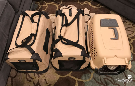 Three cats in carriers