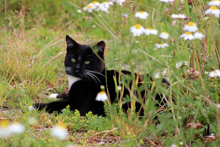 community cat | Lakes Animal Friendship Society