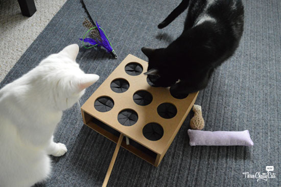 black and white cat playing