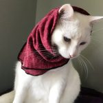 white cat in scarf