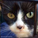 TNR of black and white cat