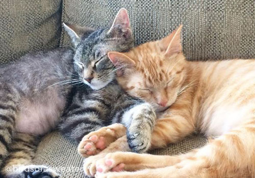 two kittens napping