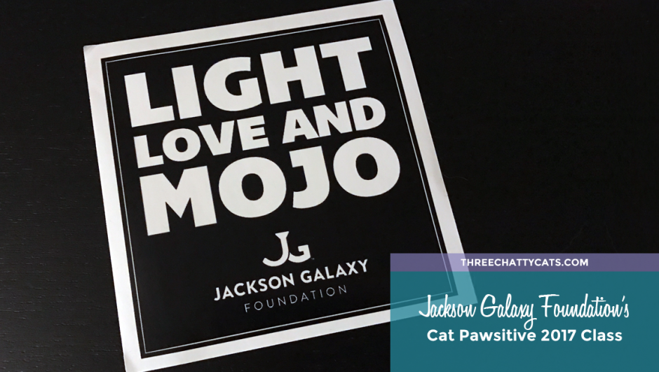 Jackson Galaxy Foundation's Cat Pawsitive