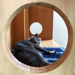 gray cat grooming at Catfe
