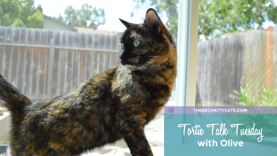 Tortie Talk Tuesday with Olive