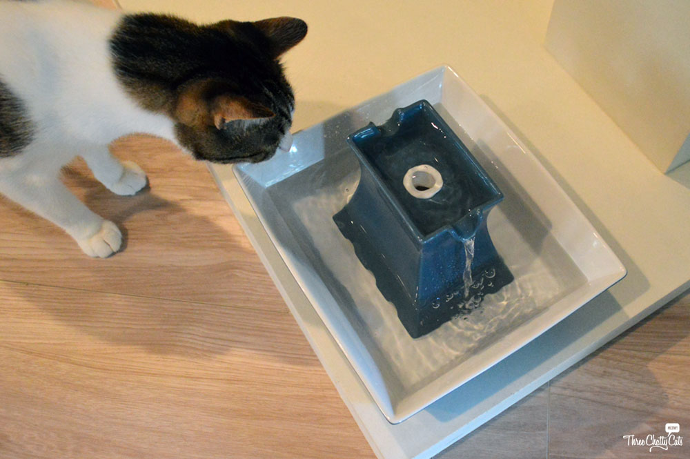 tabby cat with pet fountain