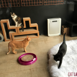 three cats in cat cafe