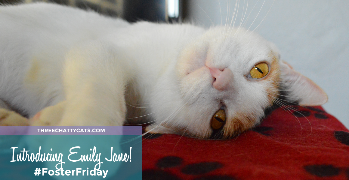 Foster Cat Emily Jane