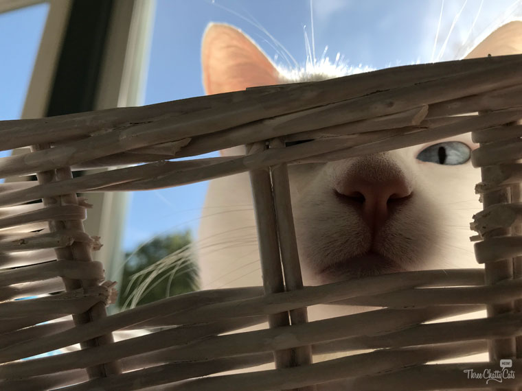 white cat peeking through basket