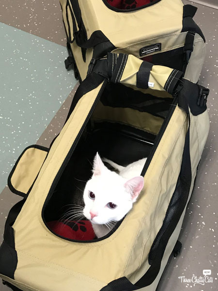 white cat in carrier