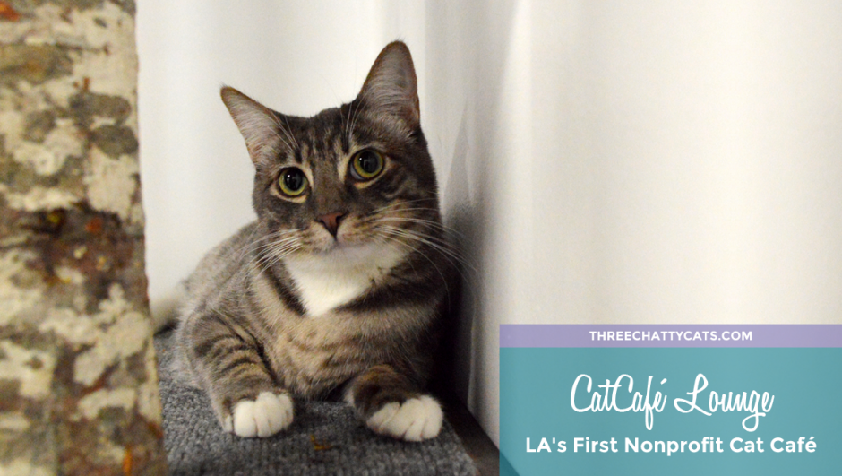 CatCafé Lounge: LA's First Nonprofit Cat Café