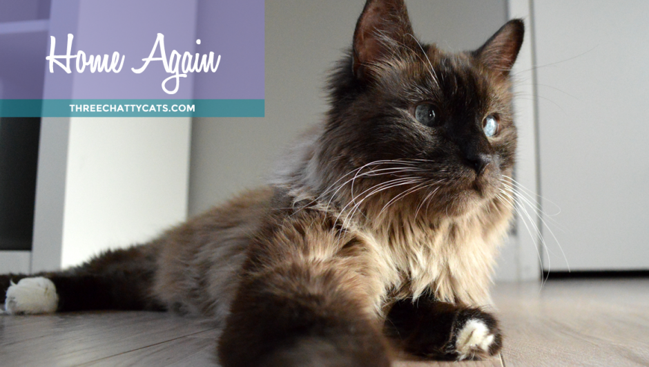 Home Again: A Foster Cat's Adoption Story