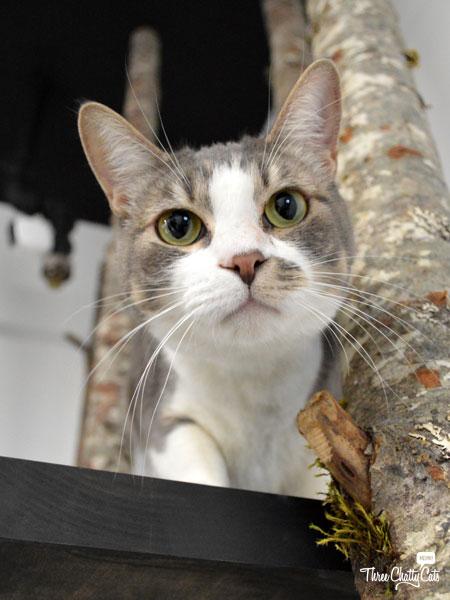 curious cat at CatCafe Lounge