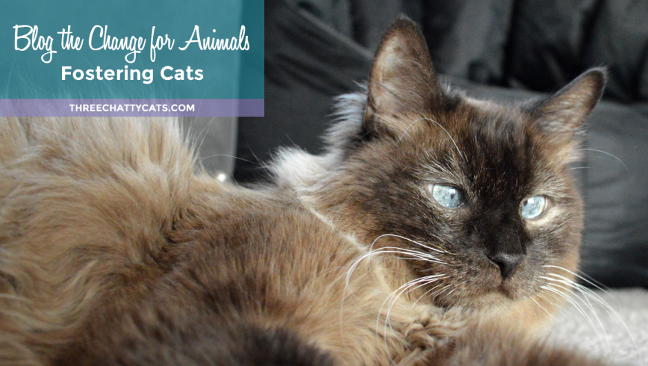 Blog the Change for Animals - Fostering Cats #BtC4A