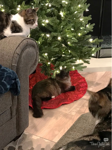 three cats and a Christmas tree