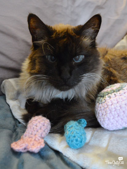 Siamese mix with cat toys