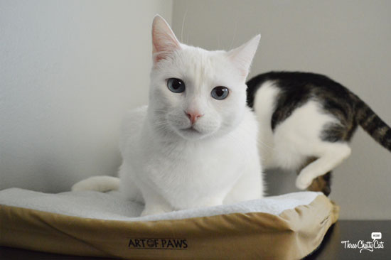 white cat on pet mat