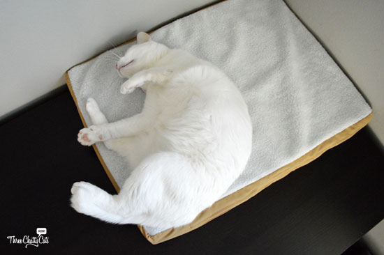 white cat on pet mat