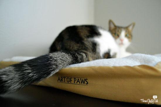 tabby cat on pet mat