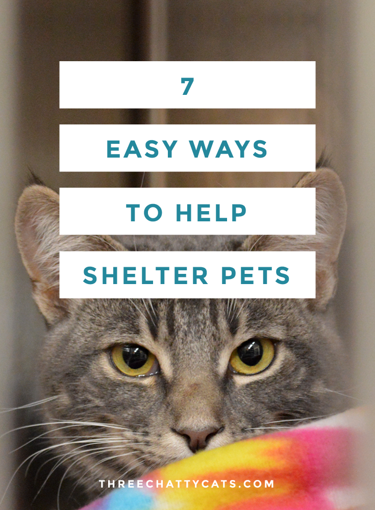 7 Easy Ways to Help Shelter Pets