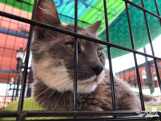adoptable cat at America's Family Pet Expo