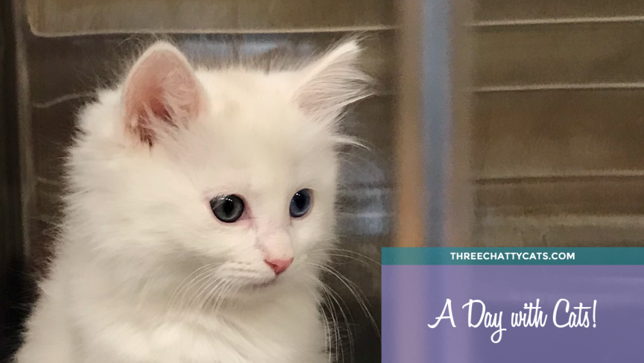 white kitten at animal shelter