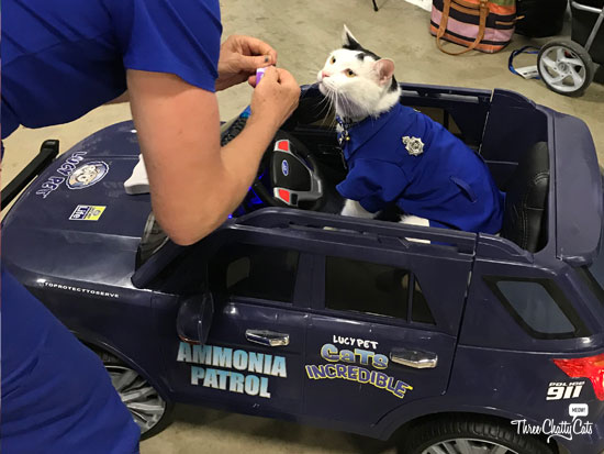 blank and white cat driving car