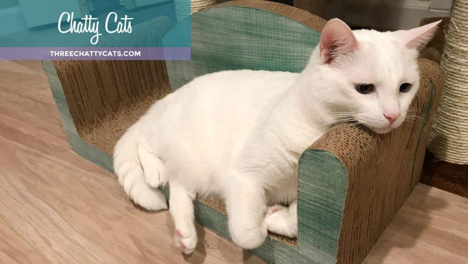 white cat on sofa scratcher